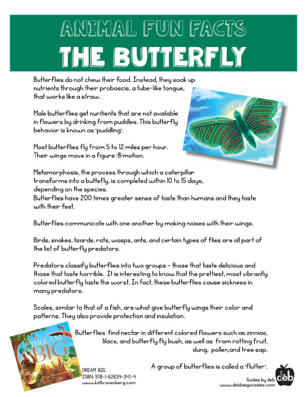 Animal Fact Sheet - Curriculum Idea - The Butterfly