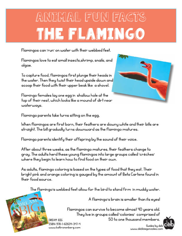 Animal Fact Sheet - Curriculum Idea - The Flamingo