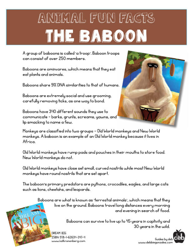 Animal Fact Sheet - Curriculum Idea - The Baboon