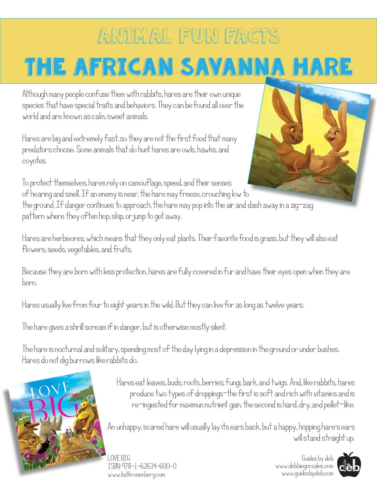 Animal Fact Sheet - Curriculum Idea - The Baboon