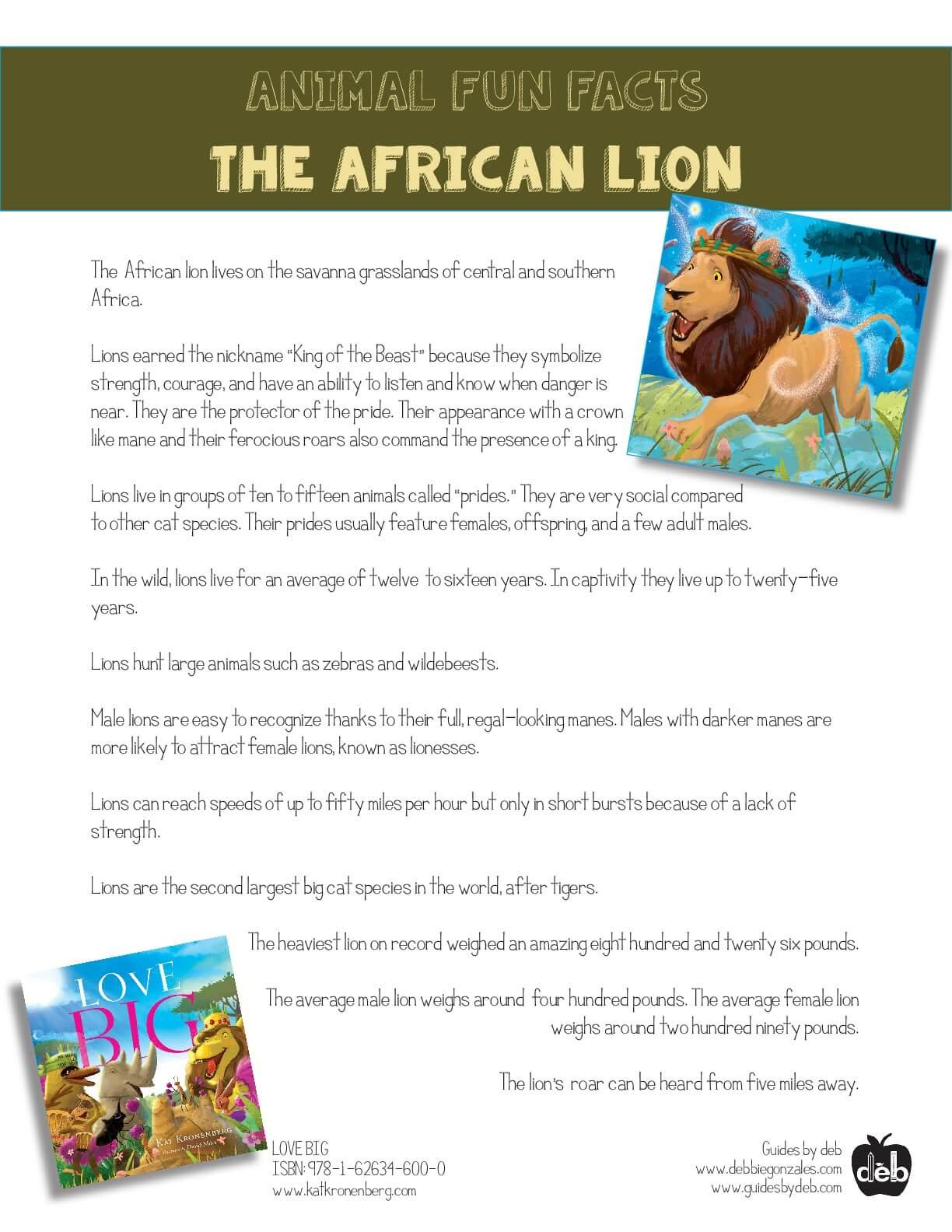Animal Fact Sheet - Curriculum Idea - The Butterfly