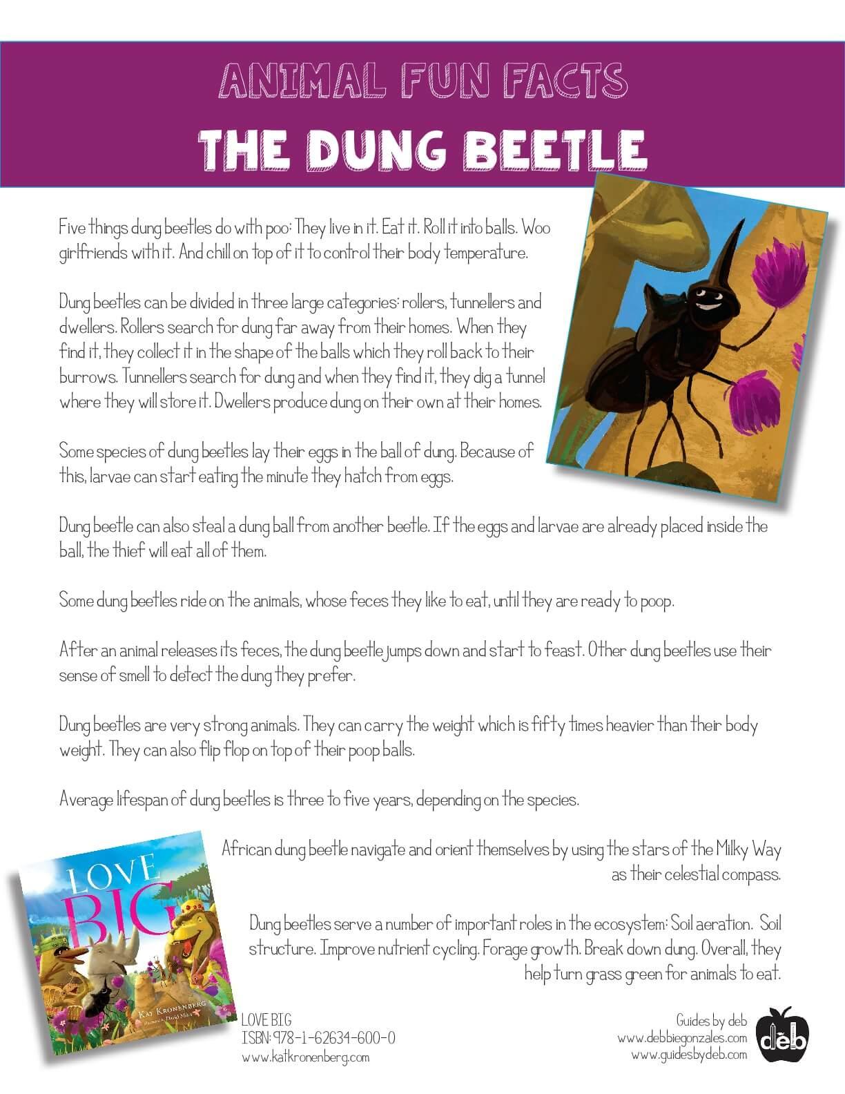 Animal Fact Sheet - Curriculum Idea - The Frog